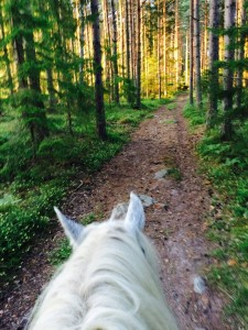 Mindfulness med häst
